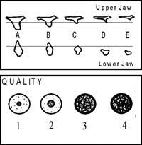 Bone Quantity and Quality Diagram