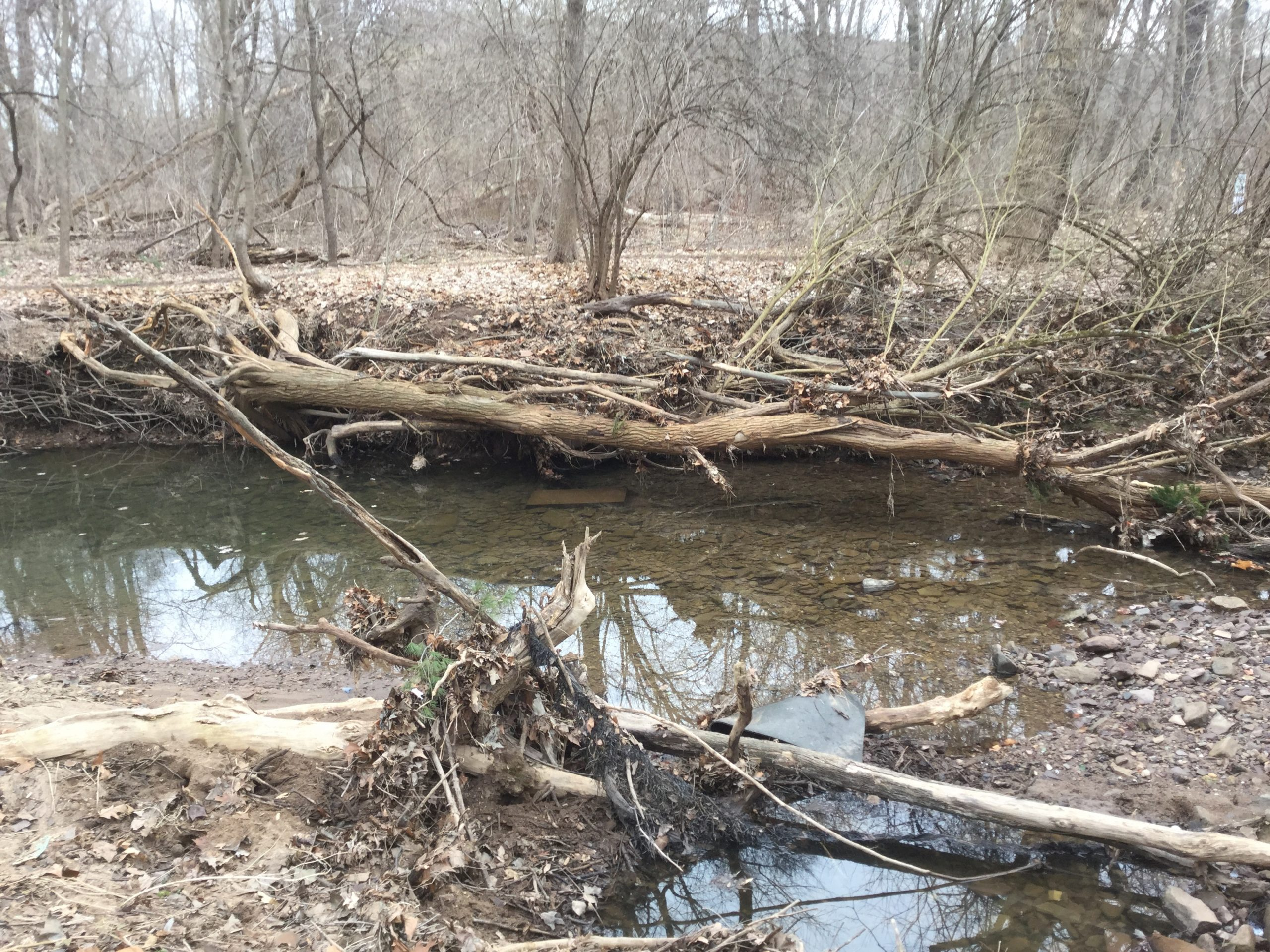 An eroded stream bank